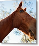 Horse In A Countryside Metal Print
