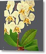 Orchid Old Print Metal Print