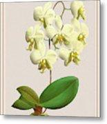 Orchid Vintage Print On Tinted Paperboard Metal Print