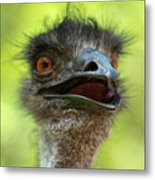 Australian Emu Outdoors Metal Print