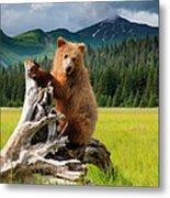 Brown Bear, Lake Clark National Park Metal Print