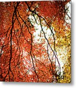 Fall Colors In Japan Metal Print