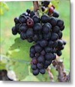Purple Grape Bunches 17 Metal Print