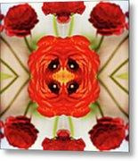 Ranunculus Flower Metal Print