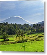 Indonesia, Bali, Rice Fields And Metal Print