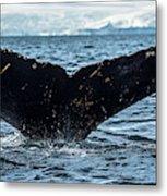 Whale In The Ocean, Southern Ocean Metal Print