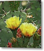 Yellow Prickly Pear Flowers Metal Print