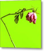Dying Flower Against A Green Background Metal Print