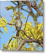 Willow Flycatcher Metal Print