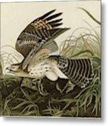 Winter Hawk  Metal Print