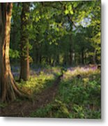 Stunning Bluebell Forest Landscape Image In Soft Sunlight In Spr Metal Print