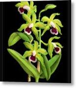 Vintage Orchid Print On Black Paperboard Metal Print