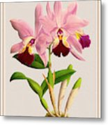 Orchid Vintage Print On Colored Paperboard Metal Print