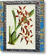 Orchid Framed On Weathered Plank And Rusty Metal Metal Print