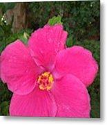 Bright Pink Hibiscus Metal Print
