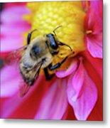 A Bumblebee On A Flower Metal Print