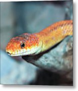 A Close Up Of A Ground Snake Metal Print