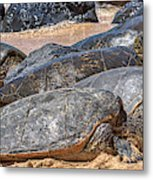 A Couple Of Turtles Stopped By Metal Print