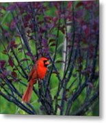 A Flash Of Red Metal Print