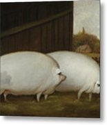 A Pair Of Pigs Metal Print
