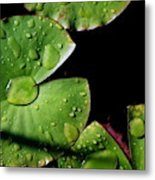 A Red Leaf Among The Water Lily Pads Metal Print