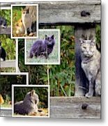 A Variety Of Cats Metal Print