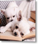Adorable Chihuahua Dogs With Books On Metal Print