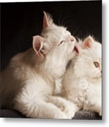 Adorable White Persian Cats Mother Metal Print
