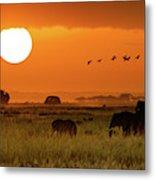 African Elephants Walking At Golden Sunrise Metal Print