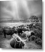 After The Rain On The Mountain In Black And White Metal Print