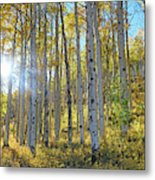 Afternoon Aspens Metal Print