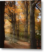 Afternoon Light In Fall Colors Of New England Metal Print