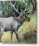 Alaska Elk Metal Print