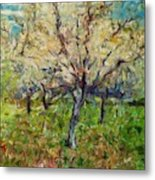 Almond Orchard Metal Print
