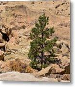 Amazing Life On The Sandstone Cliffs Metal Print