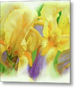 Amenti Yellow Iris Flowers Metal Print
