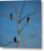 American Crows In Bare Tree Metal Print