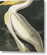 American White Pelican, Pelecanus Erythrorhynchos By Audubon Metal Print