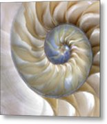 An Amazing Fibonacci Pattern In A Metal Print