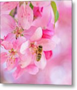 Apple Blossom 2 Metal Print