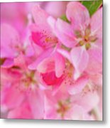 Apple Blossom 5 Metal Print