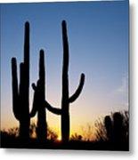 Arizona Cacti, 2008 Metal Print
