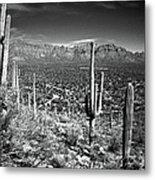Arizona, Tucson, Saguaro Np, Brown Metal Print