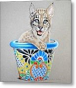 Arizona Wildcat Metal Print