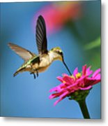 Art Of Hummingbird Flight Metal Print