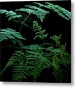 Asparagus Fern Metal Print