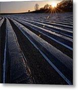 Asparagus Field Metal Print