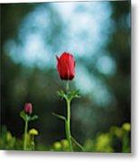 Aspecial Flower  Metal Print