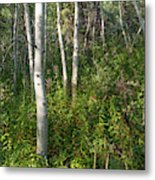 Aspen Solitude Metal Print