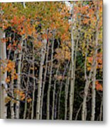 Autumn As The Seasons Change Metal Print